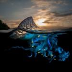 Maravillas que se esconden bajo la superficie del agua