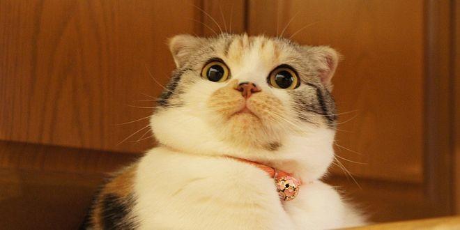 Así se asustan los gatos. ¡Mira sus graciosas reacciones en este video! , El Runrun