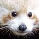 Te revelamos en fotos a este tierno animal en vía de extinción