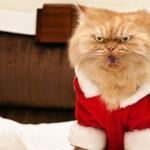 Tendrías a este gato de mascota