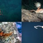 10 Animales más raros de Islas Desventuradas
