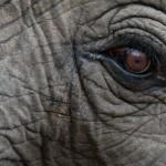 elefante que emergió del océano