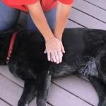Si algún día necesitas darle primeros auxilios a un perrito, así es como lo debes hacer