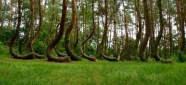 El bosque que encierra un misterio que la ciencia no ha podido resolver