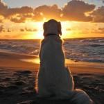 Los perros también les guardan luto a sus amigos