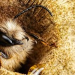 candidatas del 2015 a mejor foto de la National Geographic