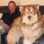 perros mas grandes del mundo 999