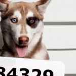 perros que van a la carcel