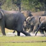 insecto que hace huir despavoridos a los elefantes slide