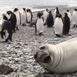 photobombs hechos por animales